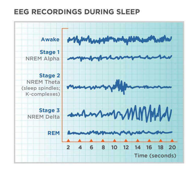 brain waves during sleep