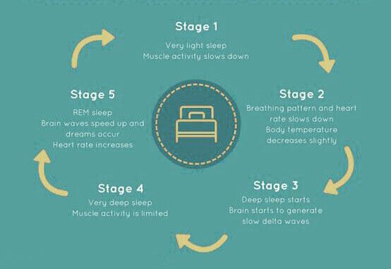 five sleep stages