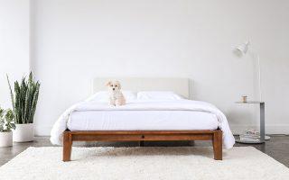 a dog lie on hybrid mattress in minimalist bed frame