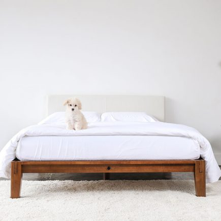 a dog lie on hybrid mattress in minimalist bed frame